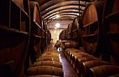 Wooden barrels, Bodega Norton, Lujan de Cuyo, Mendoza, Argentina