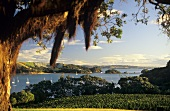 Goldwater Estate, Waiheke Island, New Zealand