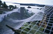Vines under bird netting, Te Whau Vineyards, Waiheke Island, NZ