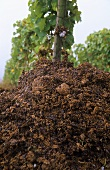 Pomace in vineyard to encourage yeast cultures