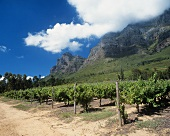 Plaisir de Merle vineyard, Franschoek, S. Africa