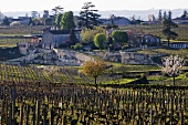 Vines near the town of St-Émilion, Bordeaux, France