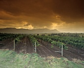 Lower Hunter Valley, New South Wales, Australia