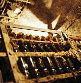 Wine storage, Maison Bouchard Père et Fils, Château de Beaune, Burgundy