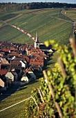 'Eschendorfer Lump' Einzellage, Eschendorf, Franconia, Germany