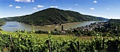 Vineyard with wine town of Oberwesel, Middle Rhine, Germany
