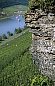 Weathered grey slate, 'Wehlener Sonnenuhr' Einzellage, Mosel, Germany