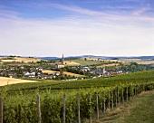 Vineyard with view of Waldböckelheim, Nahe, Germany