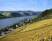 View over vineyards towards Lorch, Rheingau, Germany