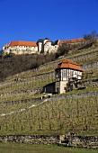'Freyburger Edelacker' site, Freyburg, Saale-Unstrut, Germany