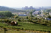 Vineyard 'Karsdorfer Hohe Gräte', Karsdorf, Saale-Unstrut, Germany