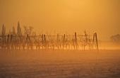 Winterstimmung in den Weinbergen bei Gönnheim, Pfalz