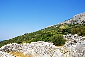 Old vineyards among rocks near Sveta Nedelja, island of Hvar, Croatia