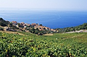 Landscape of vines near Sveta Nedelja, island of Hvar, Croatia
