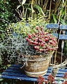 Verschiedene Pflanzen im Blumentopf