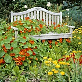 Garden seat overgrown with nasturtiums