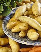 Potatoes, variety 'La Ratte du Touquet'