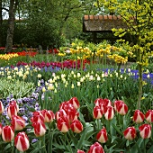 Verschiedene blühende Frühlingsblumen in Gartenanlage