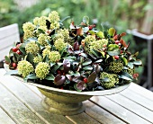 Skimmia and pernettya in a bowl