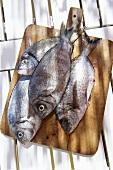 Bass on a chopping board (Corsica)