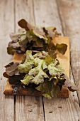 Oak leaf lettuce on a wooden board