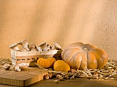 Organic mushrooms in a wooden basket, pumpkins and hazelnuts
