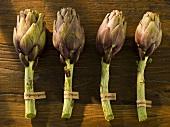 A row of four organic artichokes