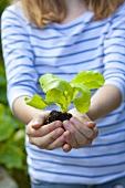 A girl holding a lettuce seedling