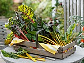 Red and yellow-stemmed chard in box on garden table