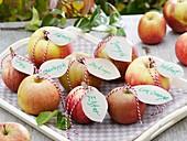 Verschiedene Apfelsorten mit Namensschildern auf Tablett