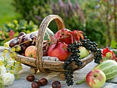 Autumn produce: apples, grapes, chestnuts, fennel & ornamental gourds
