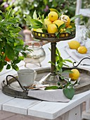 Mediterrane Tischdeko mit Zitronen in antiker Schale auf Tablett