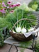 Frische Fenchelknollen im Weidenkorb auf Gartenstuhl
