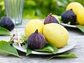 Zitronen (Früchte, Blätter und Blüten) mit Feigen auf Tellern