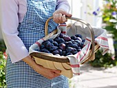 Woman holding basket of plums