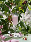 Raspberry milkshake in front of raspberry plants