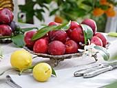 Schale mit roten Pflaumen, davor Zitrone & gelbe Pflaume