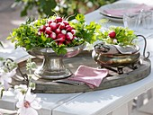 Radishes and parsley in silver dishes