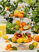 Verschiedene Zitrusfrüchte auf Etagere