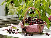 Sweet cherries in basket on garden table