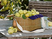 White Transparent apples in picnic basket on garden table