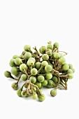 Jurubeba fruit (Brazilian medicinal plant)