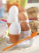 Boiled eggs in flowerpots