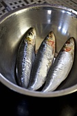 Sardines in stainless steel bowl