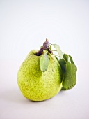 Green pear with stalk and leaves
