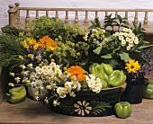Heilpflanzen, Kräuter und Gemüse in einem Tontopf