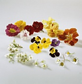 Various edible flowers