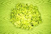 Grüner Eichblattsalat auf grünem Untergrund