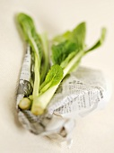 Choi sum (Chinese brassica)