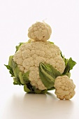 Two baby cauliflowers and one normal-sized cauliflower